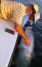 bob at the bahia honda tarpon fishing charters bridge big pine key fl
