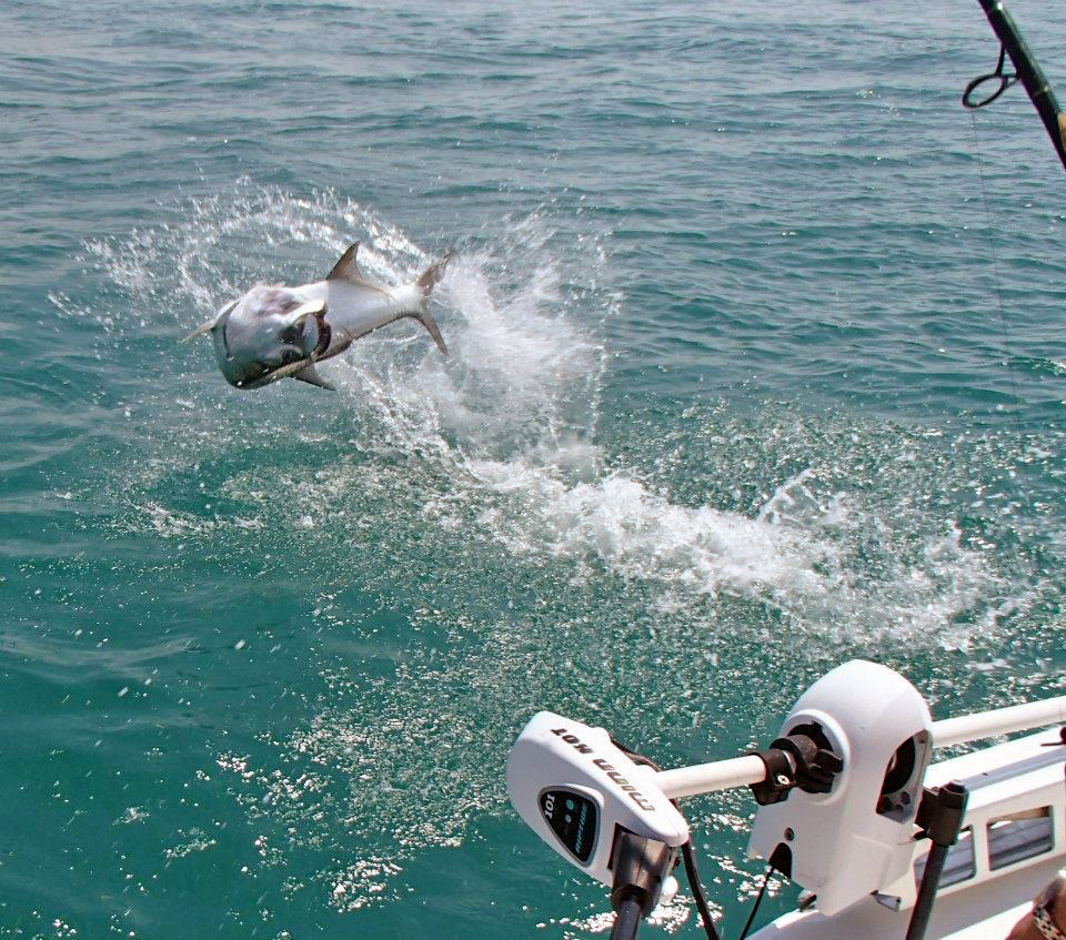 bahia honda tarpon fishing charters florida keys key west