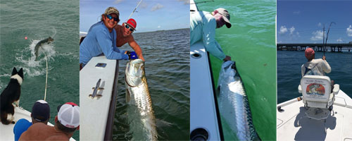 June Tarpon fishing report bahia honda charters
