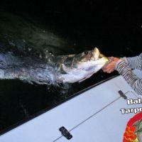 jill fishing bahia honda tarpon charters