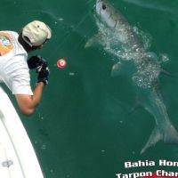 Captain John Dant Kevin Grubb doubled up on bahia honda tarpon