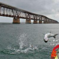tarpon jumping bahia honda fishing charter