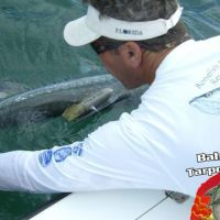Tarpon measured by University of Miami Fish bruce ungar Research