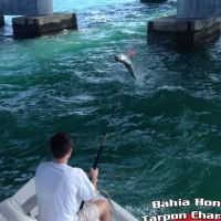 big pine key tarpon fishing charter