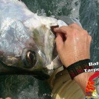 tarpon fishing charter honda