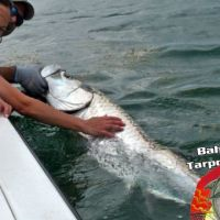 tarpon fishing charter bahia honda marathon