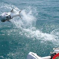 Jump11 Bahia honda keys tarpon charters