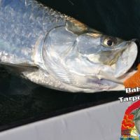 Bahia Honda fishing tarpon charter