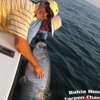Florida Keys bahia honda tarpon charter fishing